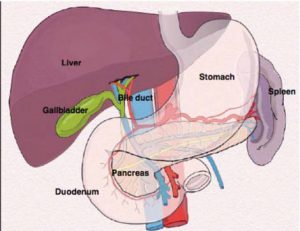 WHAT IS GALL BLADDER?